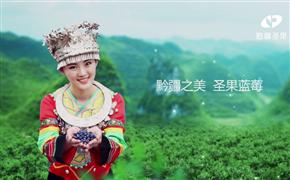 黔江圣果蓝莓